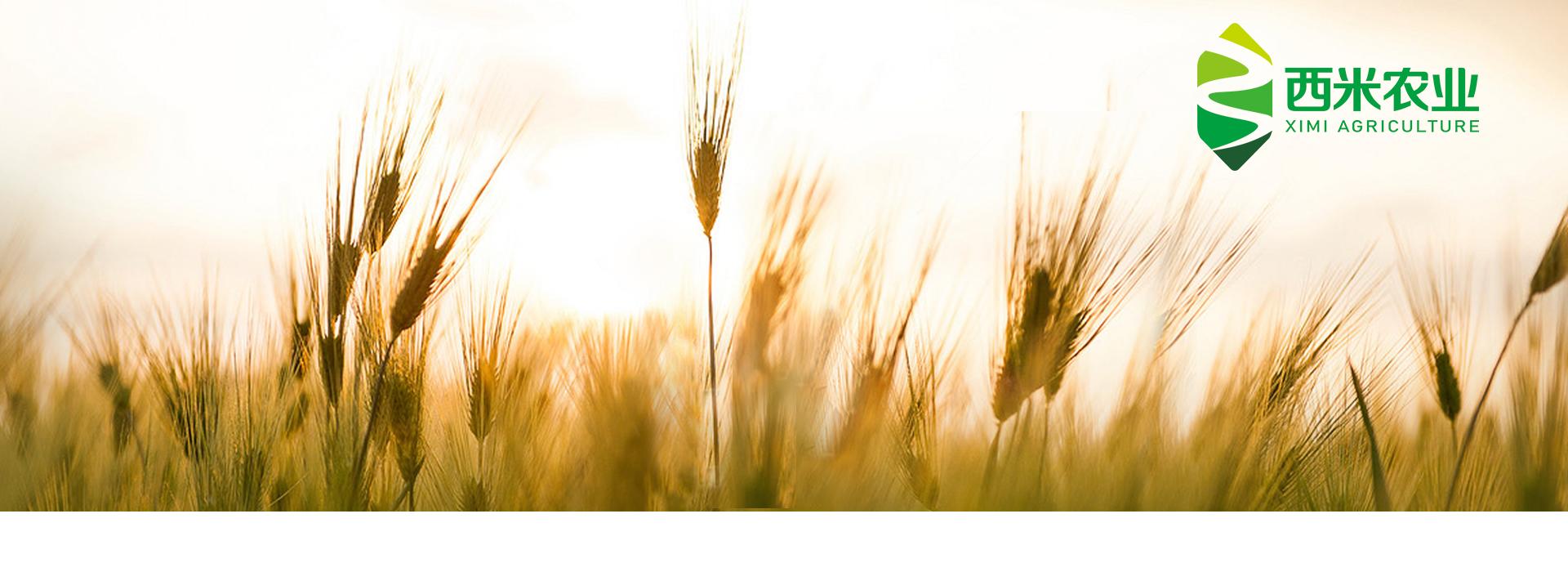 智慧农业(图1)